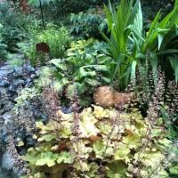 Steve's shade garden