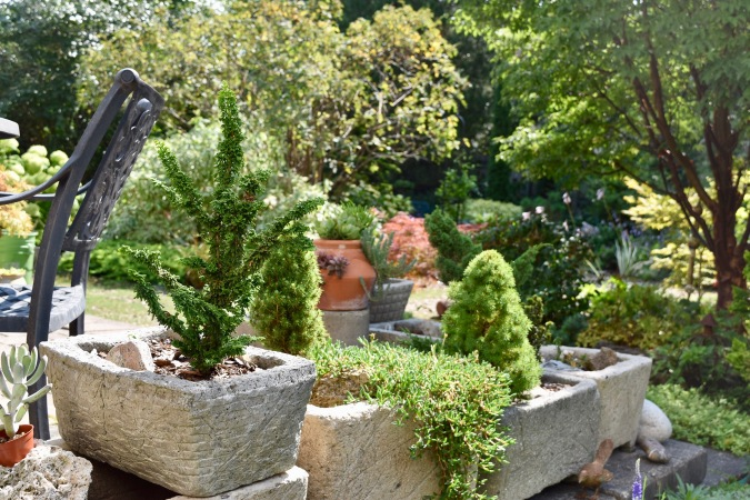 The Evans conifer collection includes many in pots.