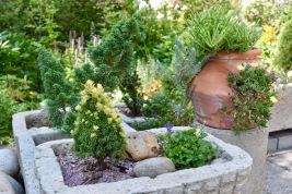 There are LOTS of hypertufa planters throughout the garden