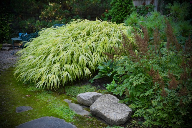It's hard to take a bad photo ofJapanese Forest grass.