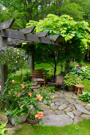 """Vine-covered """"island"""" in the middle of a garden in Orchard Park, NY."""