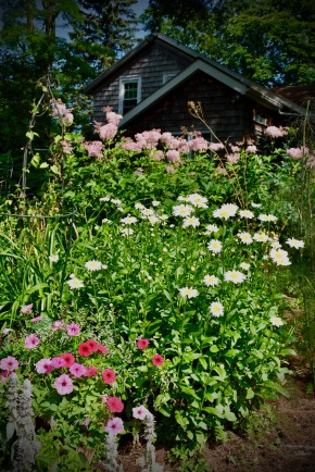 Annuals, perennials, srubs, and trees coexisting like they would in nature. Nothing too formal in this garden.