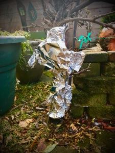 dwarf espalier apple tree wrapped in foil