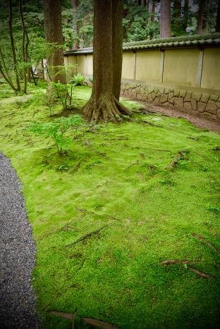 A carpet of moss.