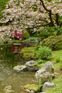 Nitobe Memorial Garden UBC Botanical Garden pond cherry tree