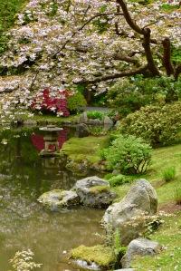 Nitobe Memorial Garden UBC Botanical Garden pond cherry tree