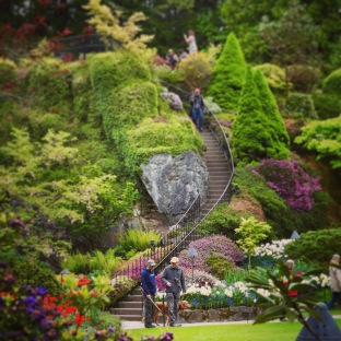 Gardening's most famous stairs? The Quarry Garden at Butchart Gardens, Victoria, British Columbia.