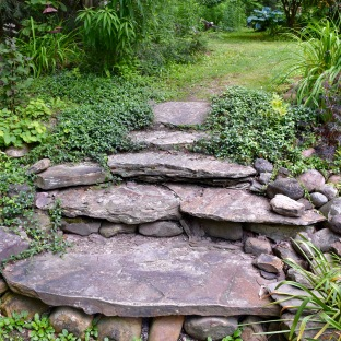 Smug Creek Gardens in Hamburg NY. Stairs buit by hosta enthusiast Mike Shadrack.