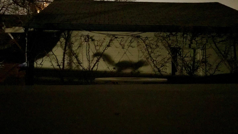 squirrel shadow batsignal