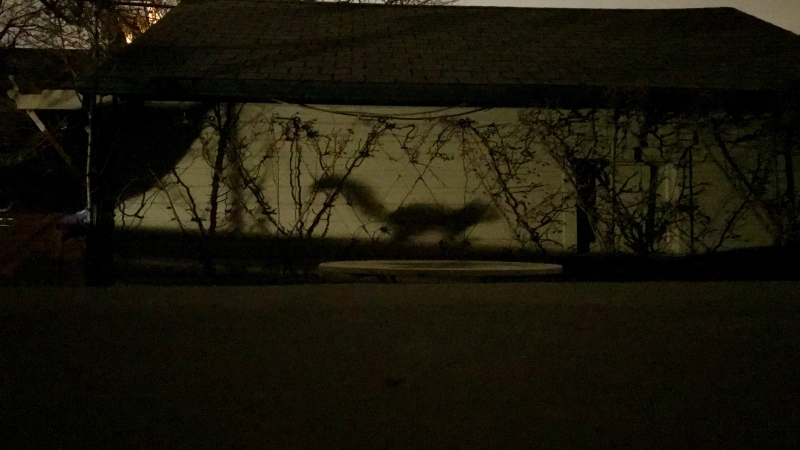 squirrel shadow batsignal
