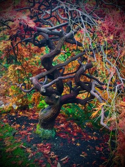 Branklyn Gardens, Perth, Scotland