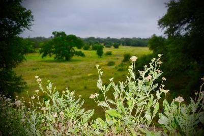 The Savanna Meadow skirts a native grassland