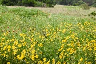 The Savanna Meadow