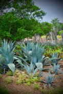 West Texas Mountain Collection (Agave)