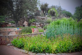 The Central Gardens are part of the Wildflower Center's original core