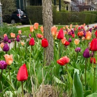 Spring into inaction