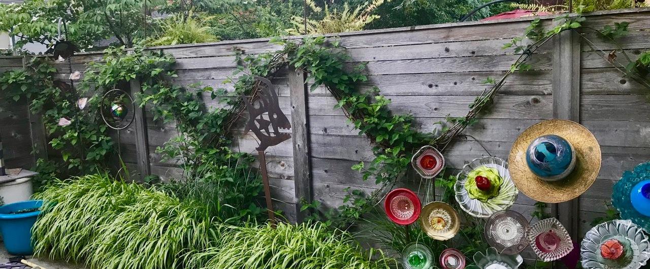 blackberry vines
