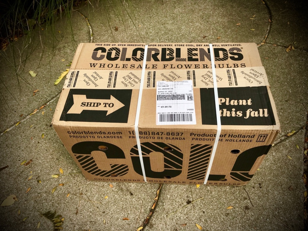 box of colorblend flower bulbs