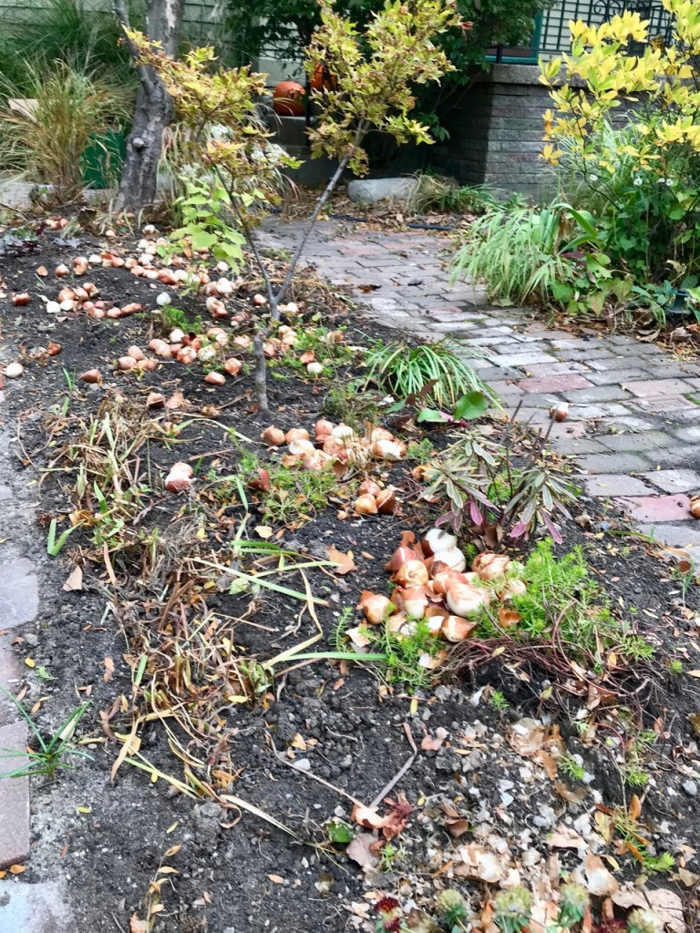 flower bulb placement in flower bed